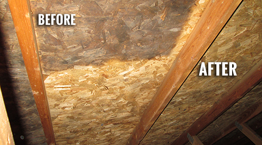 Can Mold Be Completely Removed From A Home