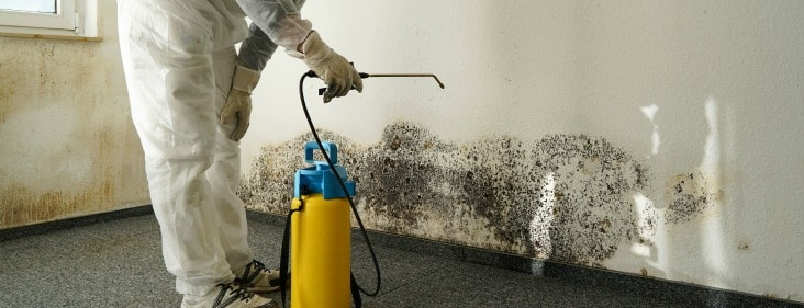 mold inspection boca raton