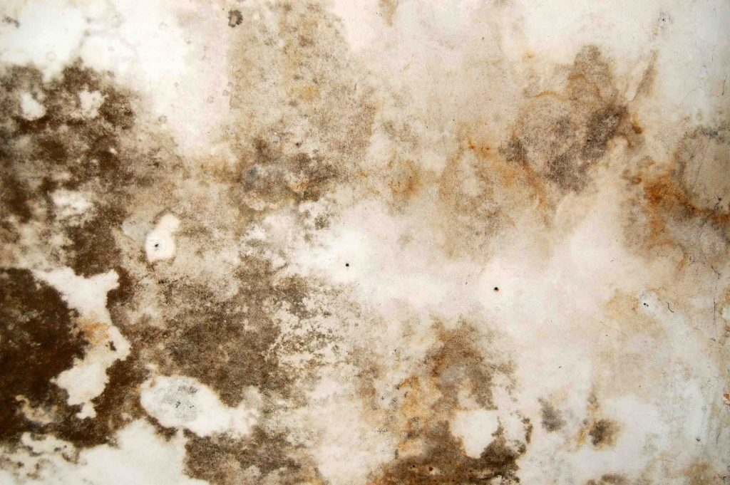 Mold Remediation in Boca Raton