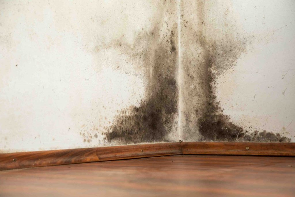 What You Should Look For In A Mold Testing Professional