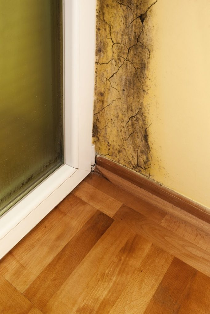 How Do You Remove Mold Without Calling The Professionals